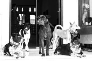 tara's dogs